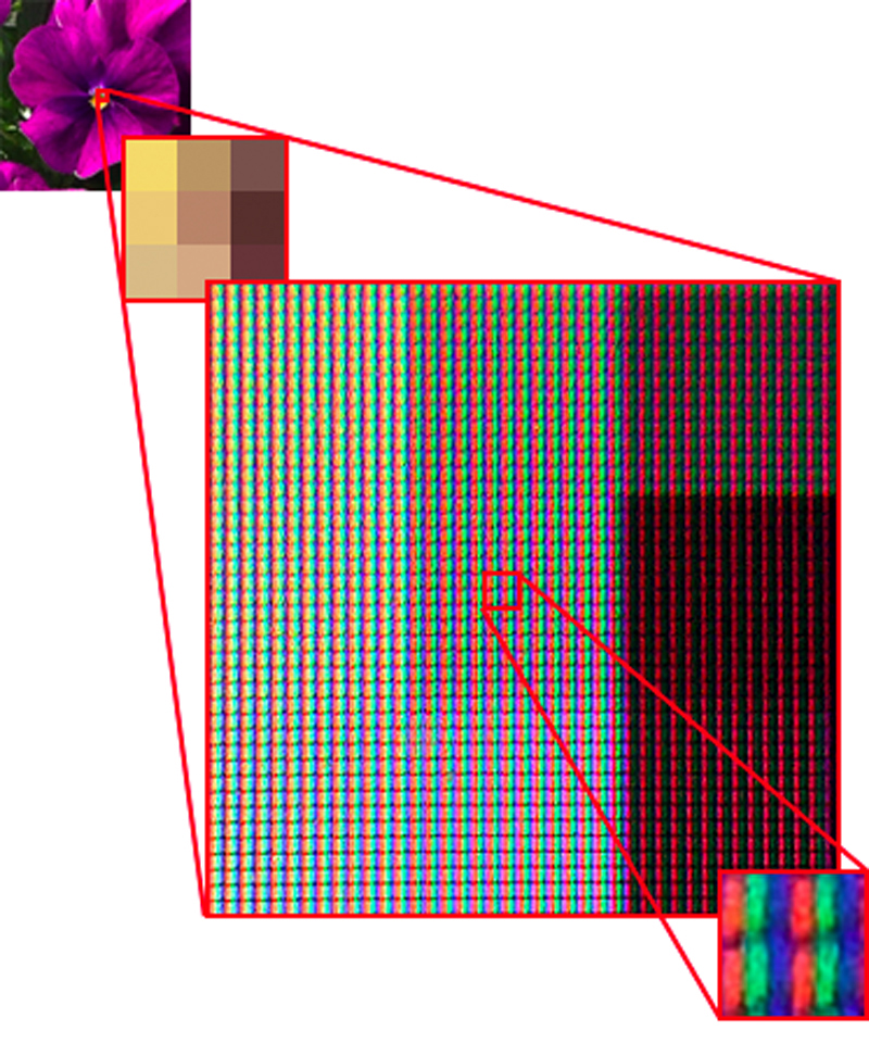 Monitor display resolution, which is expressed in terms of the number of pixels in a matrix of small squares (e.g. 800 x 600 pixels or 1,024 x 768 pixels), can be adjusted by users. The number of actual physical dots on a monitor (the number of RGB dots), meanwhile, varies by monitor model. If you look at a monitor through a magnifying glass, you can see the individual RGB dots. The image you see here is a close-up of an image on a monitor. Each pixel consists of multiple RGB dots.
