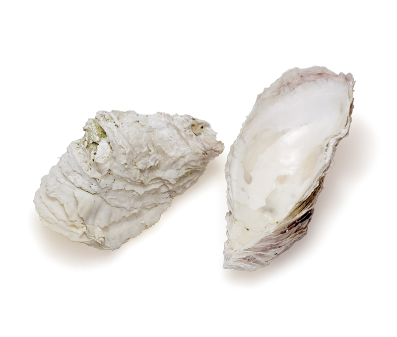Weathered oysters
